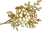 flower-illustration.png